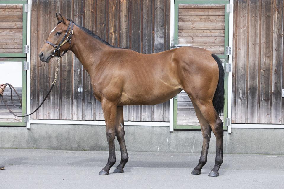 【ピラミマの19】(牝)~血統診断-馬場・距離適性-~シルクホースクラブ