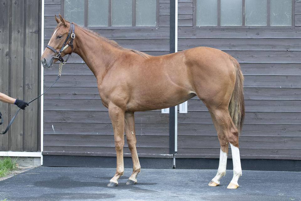 【クロンヌの19】(牝)~血統診断-馬場・距離適性-~シルクホースクラブ