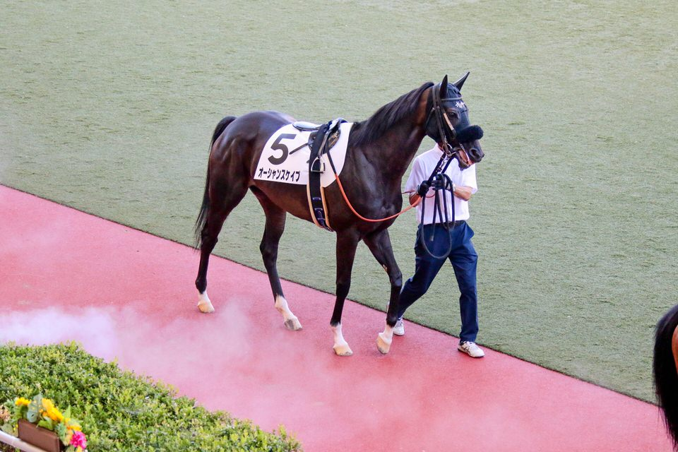 https://www.silkhorseclub.jp/detail_gallery/city/download/4905/1001.jpg